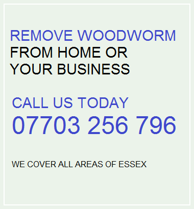 Woodworm Broomfield | Woodworm Treatment Broomfield
